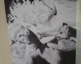0006 Mountain Lion Cave