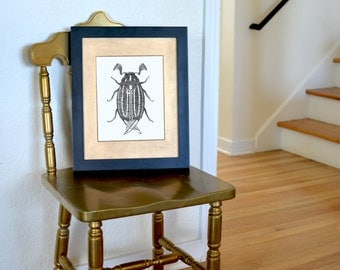 "Striped June Beetle Freehand Ink Drawing Limited Edition Print, Signed, Numbered 8""x10"""