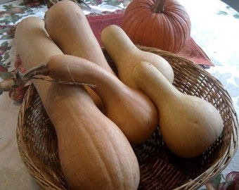 Butternut Squash Seeds - Homegrown Organic - Free Shipping