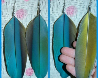 XLG Macaw Feather earrings