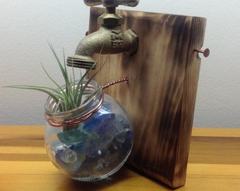 AIR PLANT Wall decor or TABLETOP display with one Tillandsia (air plant)