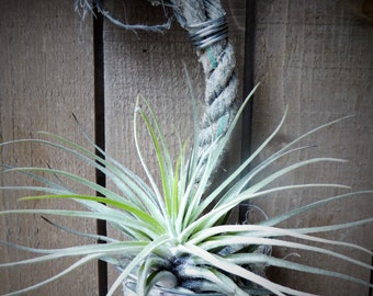 Rope airplant holder