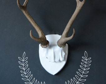 Large Faux Deer Antler Mount, White Plaque With Natural Antlers, Unique Fake Resin Decor, Animal Friendly Wall Art, Faux Antlers, Antlers