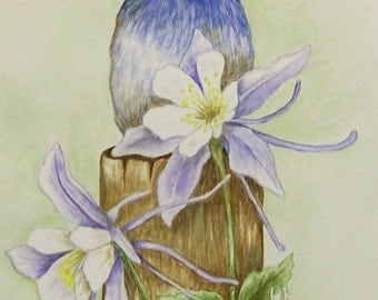 Mountain Bluebird and Columbines, Realistic watercolor painting of the Mountain Bluebird and Columbine flowers.