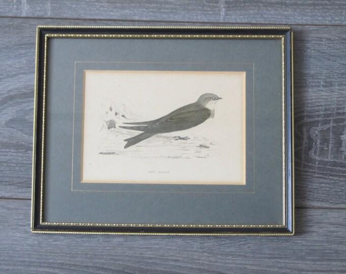 Antique lithograph bird print, framed ornithology image Sand Martin in blacks, blues, ivory off-white, Riparia riparia