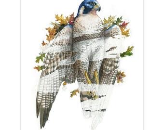 Erase - Falcon With Leaves Print - Fantasy Bird Art