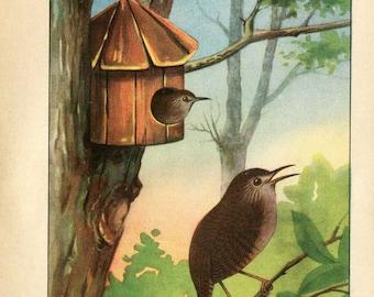 Vintage 1927 American Birds Original Bookplate Illustration, Print, Wren, Wrens in Bird House, Bird Outdoor Scene Print, Wall Decor,