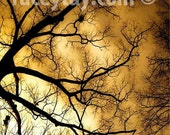 Halloween Art- Fall Nature Photography- Surreal Gold & Black Tree Branches- Spooky Fine Art Print