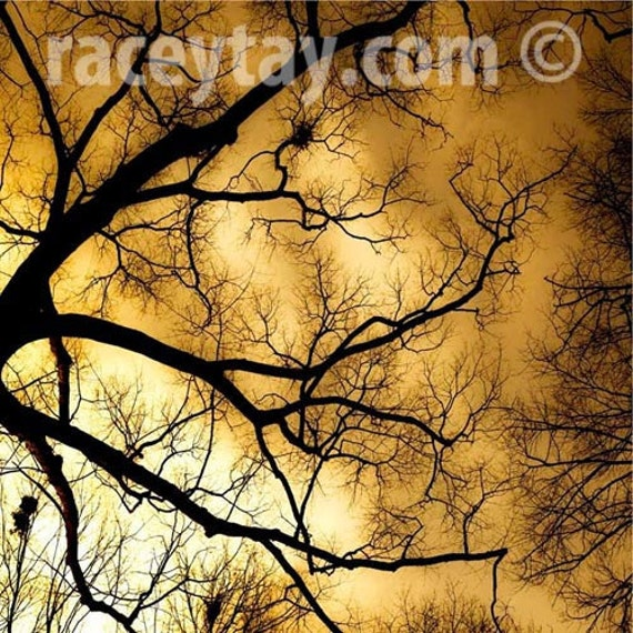 Fall Nature Photography- Surreal Gold & Black Tree Branches- Spooky Fine Art Print