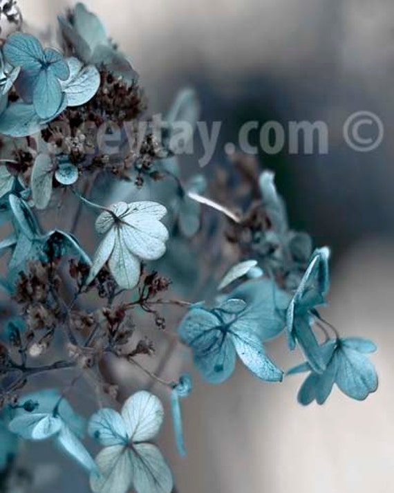 Blue Gray Wall Art, Flower Photography, Hydrangea Photos, Pastel Blue Hydrangea, Gray Wall Art, Shabby Chic Wall Art, Blue Hydrangea Photo