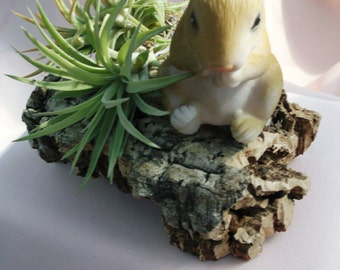 Cute little bunny on cork bark with Ionantha airplant friends