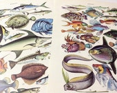2 Double sided FISH Vintage Illustrated Poster - Fishes species posters from spanish antique book