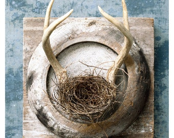Antler Nest Trophy Forrest Forage Upcycled architectural relic wood zinc plaque photo photograph wall decor