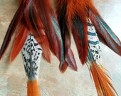 Long Lady Amherst Pheasant Tail Feather Earrings