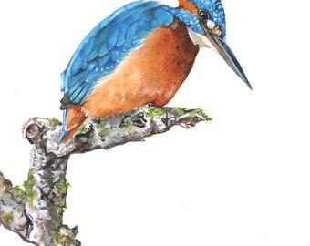 Kingfisher painting  bird watercolor painting, K2014,  Print of watercolor painting - A4 size Kingfisher watercolour painting,bird art print