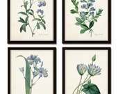 Botanical Print Set, Redoute Botanical Prints, Canvas Art, Giclee, Blue Botanical Prints, Illustration, Wall Art, Prints and Posters