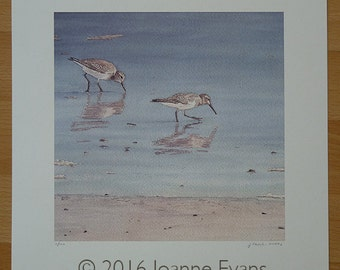 "Two Sanderlings at the Seashore 8"" x 8"" Print"