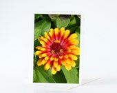 SALE CARDS, Flower Cards, Stargazer Lily, Zinnia Blank Photo Greeting Cards, Nature Sale Cards