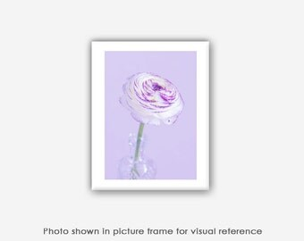 Flower Photography, Purple Ranunculus Flower Prints, Photographs, Blank Photo Greeting Cards, Note Cards, Card for Mom, Macro Photography