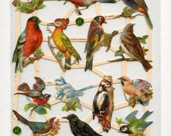 Bird SCRAP RELIEFS, Scrap Reliefs, Victorian Birds, Bird Die Cuts, Paper Birds, Bird Paper Clip Art, Nature Die Cuts, ef Scrap Reliefs, C2