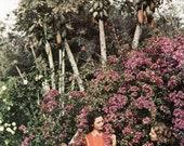 Texas Papaya Bougainvillaea Melting Pot Rio Grande Delta Color Photo 1930's Original Vintage Wall Decor