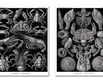 Crabs and Crayfish Print Set, Crab Prints, Crustaceans Poster, Lobster Art, Ernst Haeckel Crustaceans, Sea Life, Coastal Living Art
