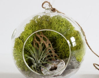 Geode and Pyrite Air Plant Terrarium Kit with Chartreuse Moss, Cholla, and Gray Sand - Small