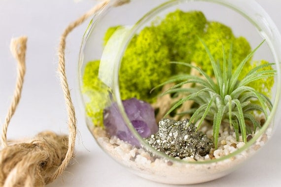 Hanging Terrarium Amethyst Crystal Point with Pyrite || DIY Kit || February Birthstone || Air Plant || Small Round