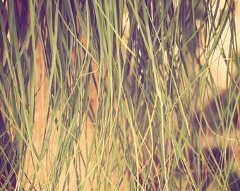 botanical photography, palm tree print, ponytail palm, botanical print, tropical decor, tropical photograph, boho decor, large wall art,