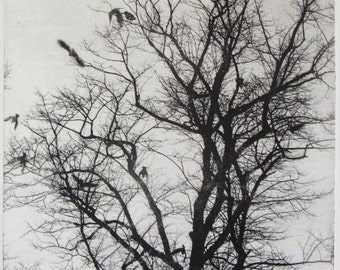 Etching - 'Rooks in a Spindly Tree'