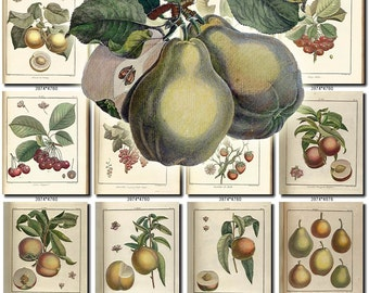 FRUITS VEGETABLES-22 Collection of 178 vintage images Almond Pear Peach Strawberry Grape pictures High resolution digital download printable