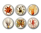Octopus Art - Fridge Magnets - Sea Life Magnets - 6 Magnets - 1.5 Inch Magnets - Kitchen Magnets