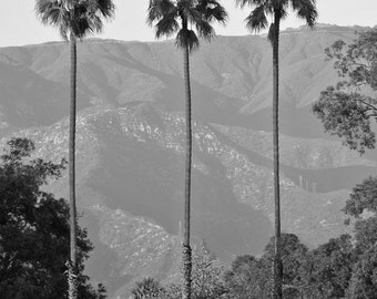 Santa Barbara Palms, Palm Tree Print, Black and White Palm Tree, Tropical Print - Photo Print