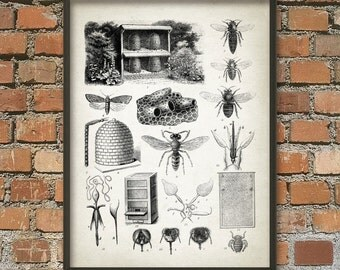 Beekeeping Wall Art Poster - Vintage Beekeeping - Honeycomb - Beehive - Honey Bee - Beekeeper Gift Idea - Vintage Beehive Illustration