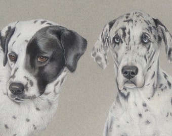 Custom Pastel Pet Portrait, Great Dane, Pet Portrait, Pet Art, 8x10 Two Pets