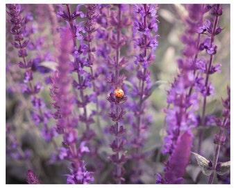 Ladybird Print, Nursery Print, Nursery Decor, Ladybird Art, Ladybird Decor, Nature Print, Lavender Print, Lavender Art, Purple Decor