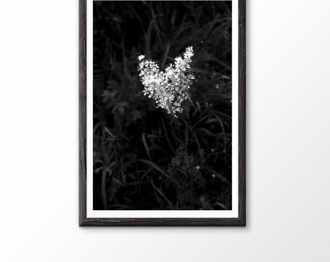 Instant Digital Download Black and white Digital download Art Macro Photography Plant Photo Nature Photography Wall art Botanical photo