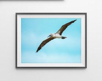 Flying Bird Print, Seagull, Gull, Bird and Sky Print, Wall Art Decor, Minimalist Art, Modern Wall Art, Beach home Decor, Animal Print, Bird