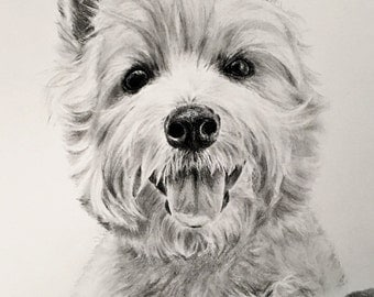 Custom charcoal portrait, 8x10 in. drawing,commissioned pet portrait,drawn from photo,pet art,original charcoal pencil drawing,puppy,dog,cat