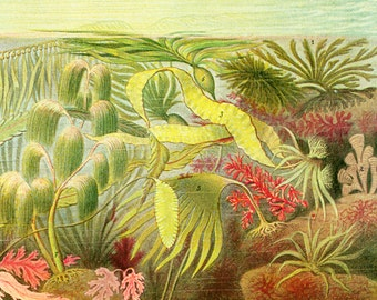 1908 Antique Seaweed print, Algae Kelp illustration, Marine Student Chart, Botanicl wall art