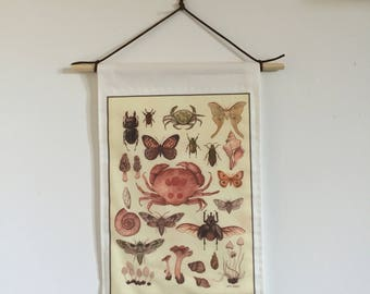 Natural History Specimens Wall Hanging