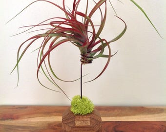 Small Wooden Geometric Air Plant Holder