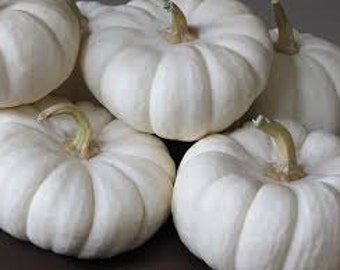 Casper Pumpkin, Cucurbita pepo 'Casper', Heirloom,  Halloween and Fall Decorations, Pie Pumpkin