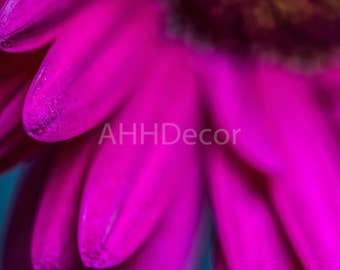 Hot Pink Fuschia Daisy Macro Close-up Fine Art Flower Photography Photo Print
