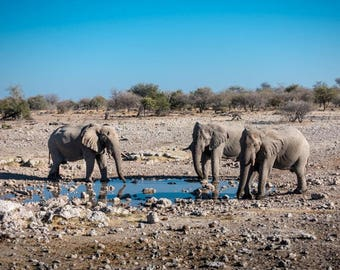 WATERING HOLE 2 | modern fine art photography blank note cards custom books interior wall decor affordable pictures –Joni Graves