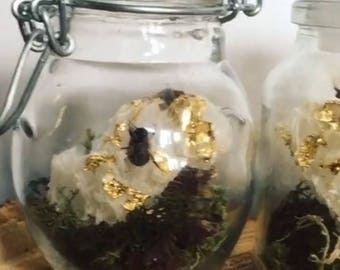 Real entomology honey bee's and gold leaf honeycomb in a small glass jar