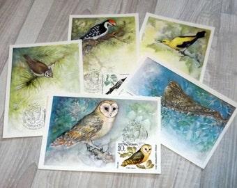 Vintage nature postcard set - Birds maxi cards - Gift for bird lover - Bird photography post cards - Collectible birds postcards