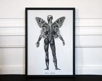 Poster Metamorphose