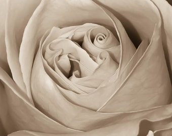 Rose Print, Sepia Photo, Roses, Art Photography,Rose Bud, Art, Nature Photograph, Flower, Botanical, Floral, Home Decor,Macro,Free Shipping