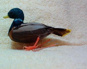 Duck,  Mallard, 4 inch figure, Vintage